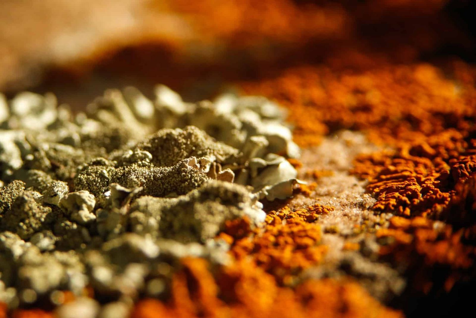 orange mold close up