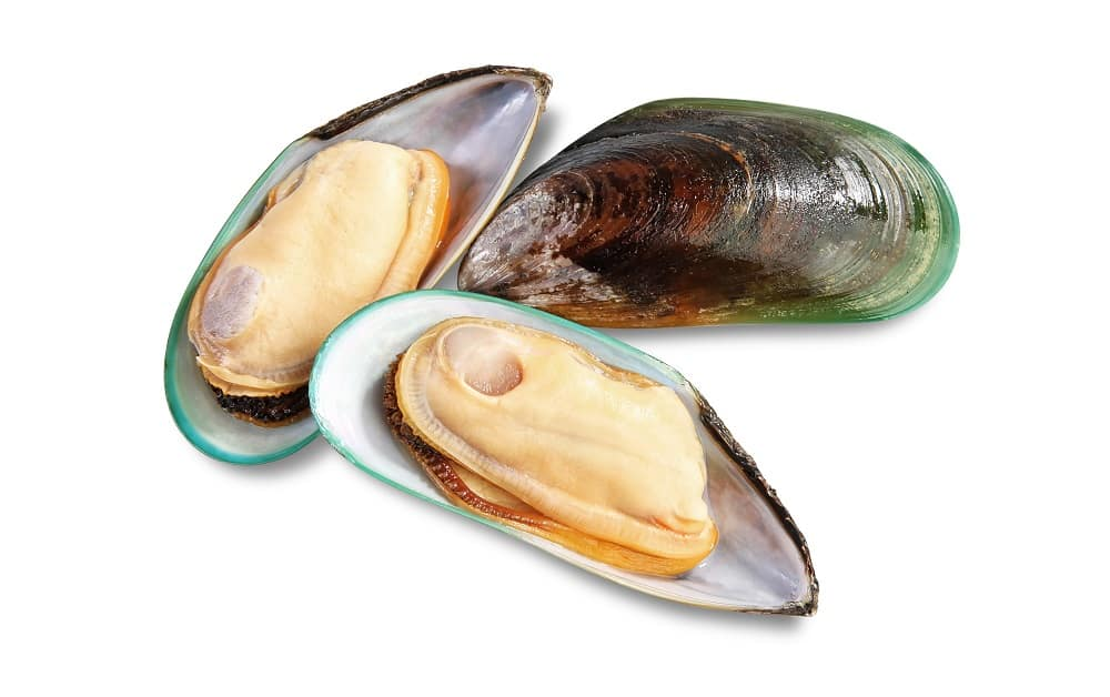 mussels safe while pregnant