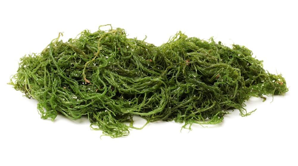 seaweed iodine content