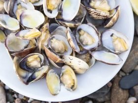 are clams safe during pregnancy