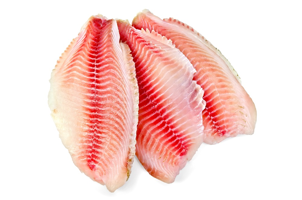 what is tilapia