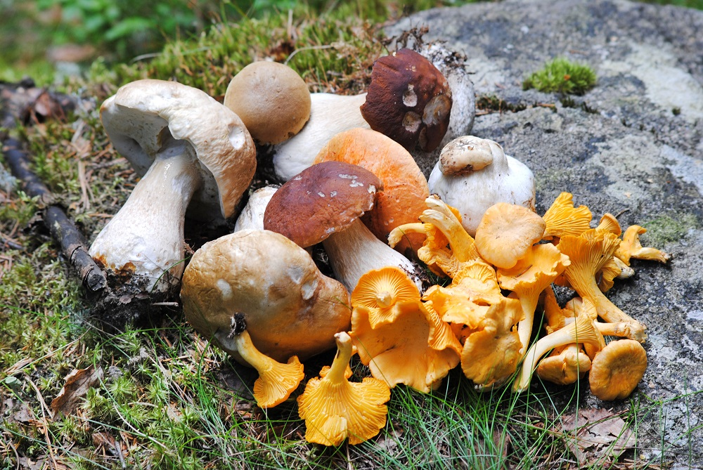 risks of eating mushrooms while pregnant